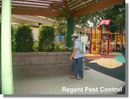 Pest Control in Office Pest Control – Flea 滅蟲 - 滅蚤