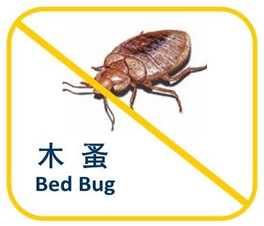 Bed Bug Photo1